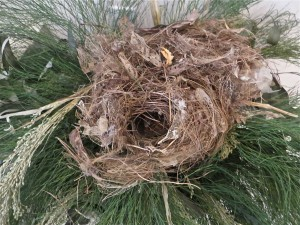 Paper and tape became part of this nest.