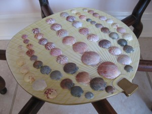 Shells collected at Sanibel and Captiva Islands, Florida